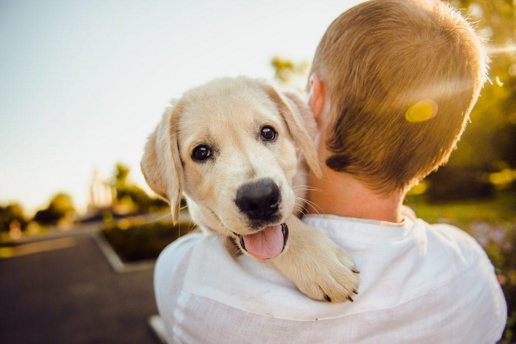 Foto de um homem de costas carregando um cachorro branco, com uma rua ao fundo. Imagem ilustrativa para o texto plano de saúde para cachorro.
