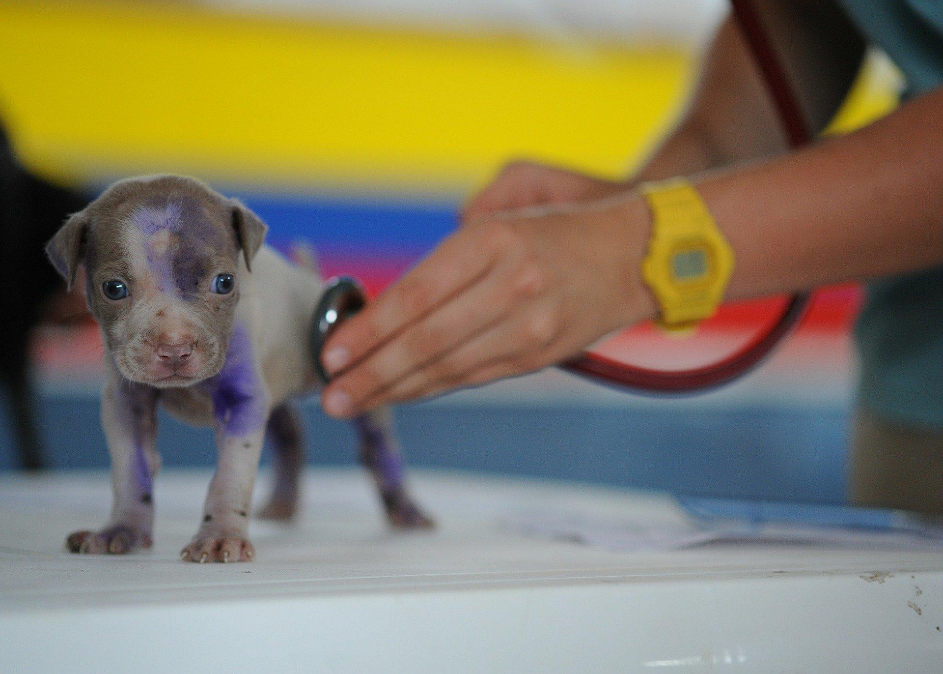 Foto de uma pessoa atendendo um cachorro filhote. Imagem ilustrativa para o texto plano de saúde para cachorro.