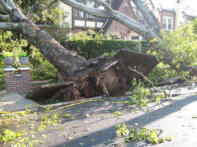Foto de uma árvore arrancada. Imagem ilustrativa para o texto seguro contra intempéries.